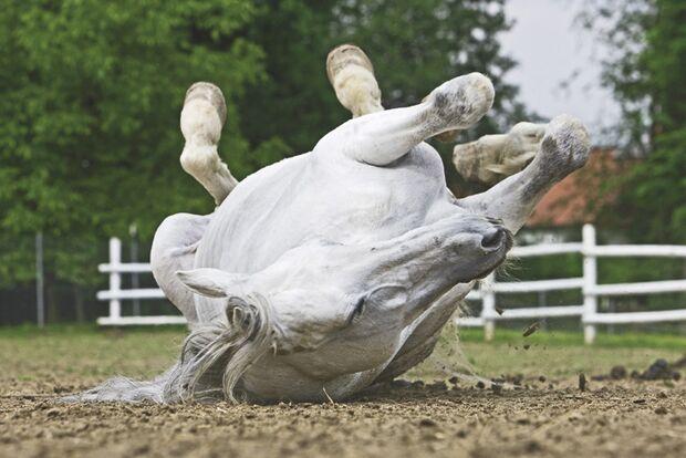 CAV 01_2010_Wie alt ist mein Pferd_07 (jpg)
