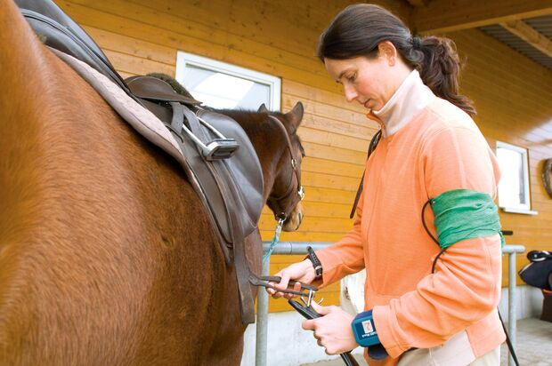 CAV 0208 Reiterstresstypen-der Mogler