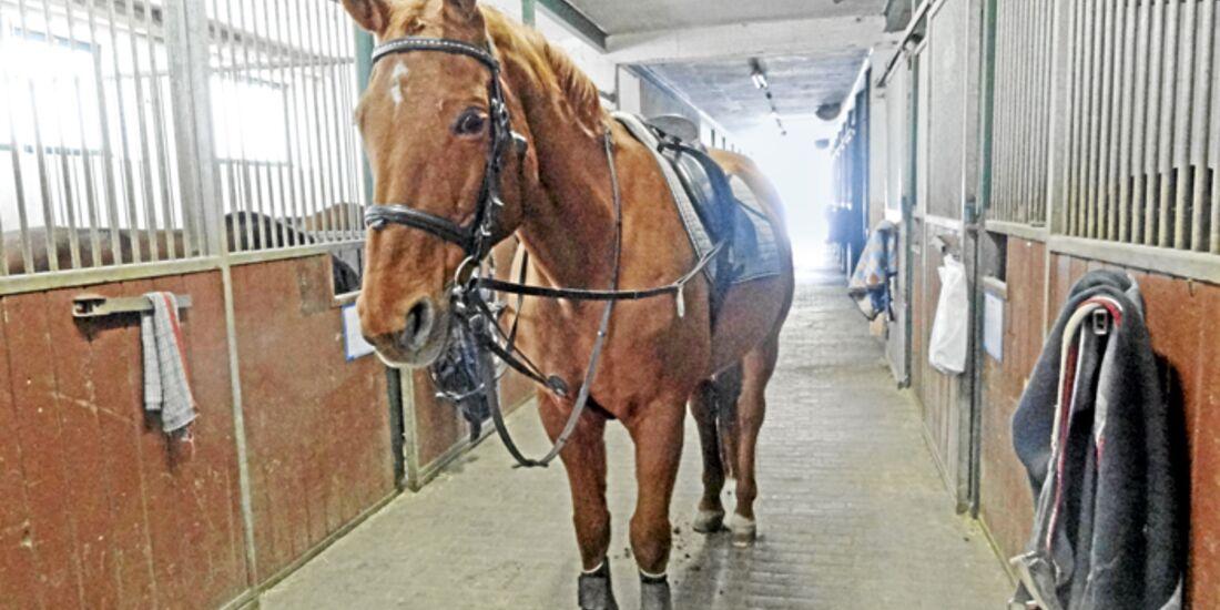 CAV-0412-Reitschultest-Reitverein-Dillingen-Pferd (jpg)