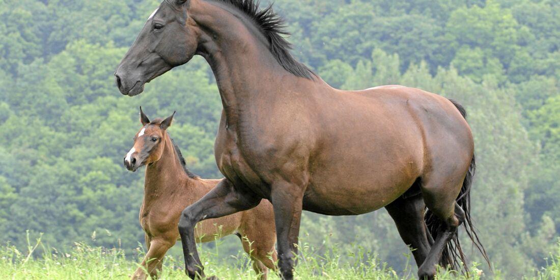 CAV 0413 Expertentipps Pferd Geburtstag Fohlen