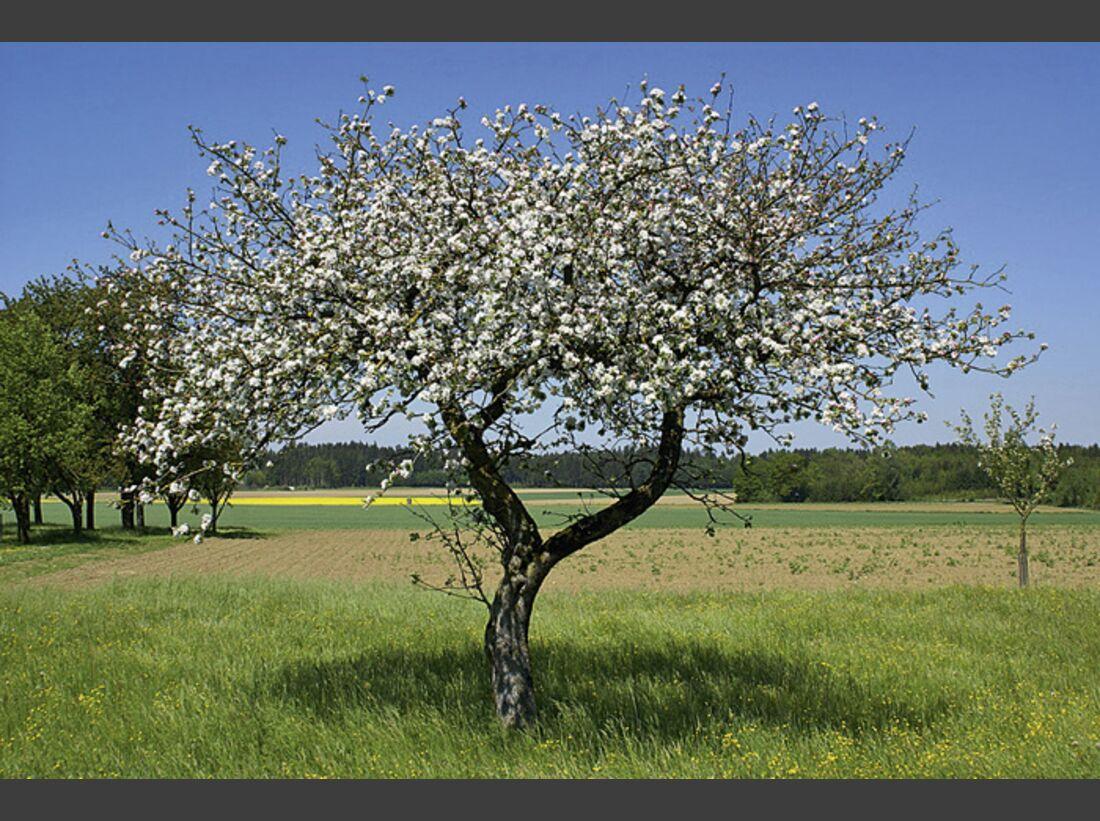CAV 06_2010 Giftpflanzen_Fotolia_7544038_S (jpg)