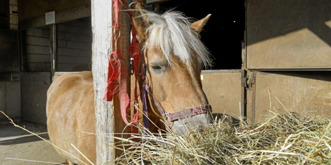 CAV-0612-Reitschultest-Bonanza-Pferd (jpg)