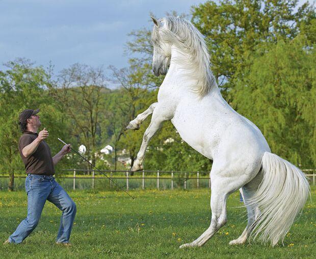 CAV 12_2010 Horsemanship Ausbilder_Reitweisen-Vergleich_Wanzenried_Schoenewald (jpg)