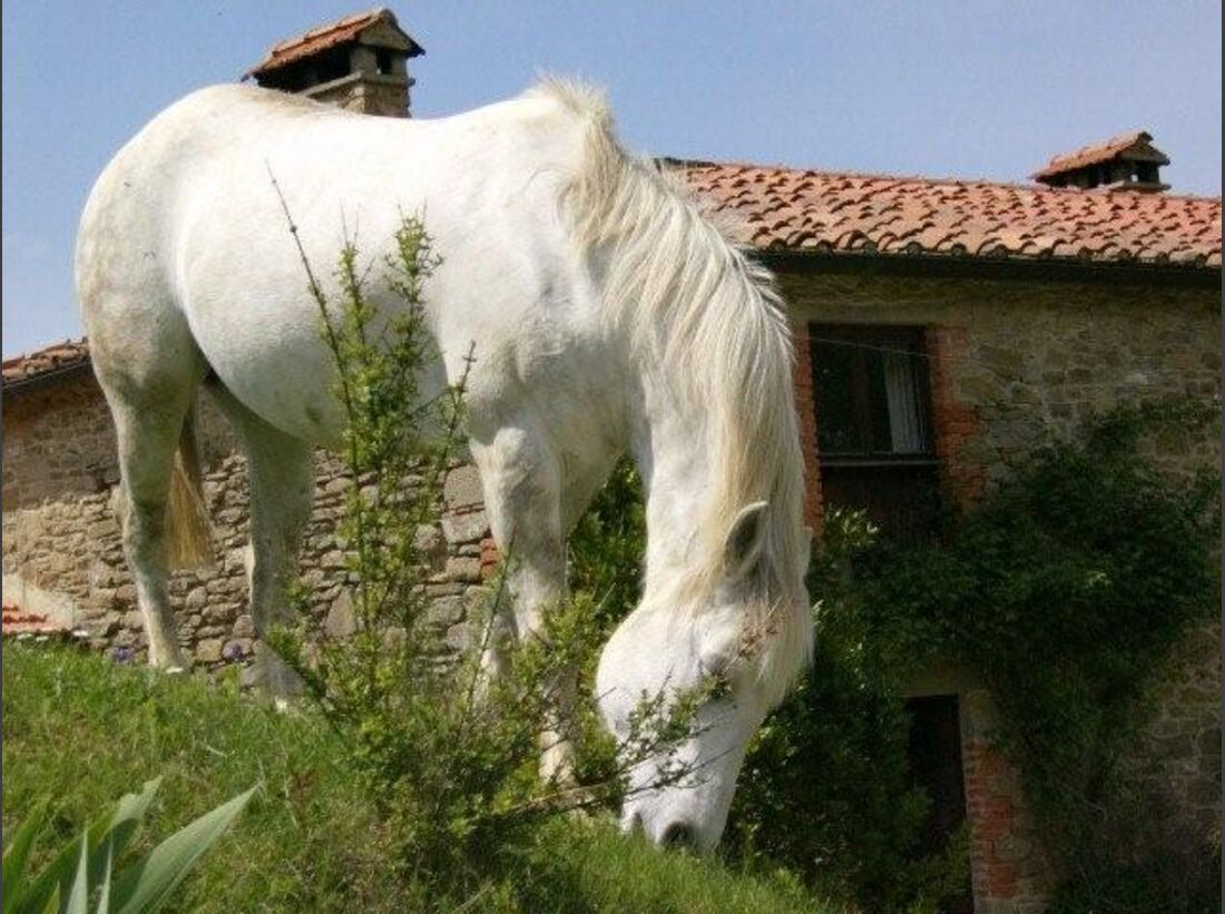 CAV_1209_Casa Bivignano_03 (jpg)