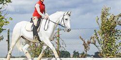 CAV 201702 Läuft mein Pferd im Takt und Teaser