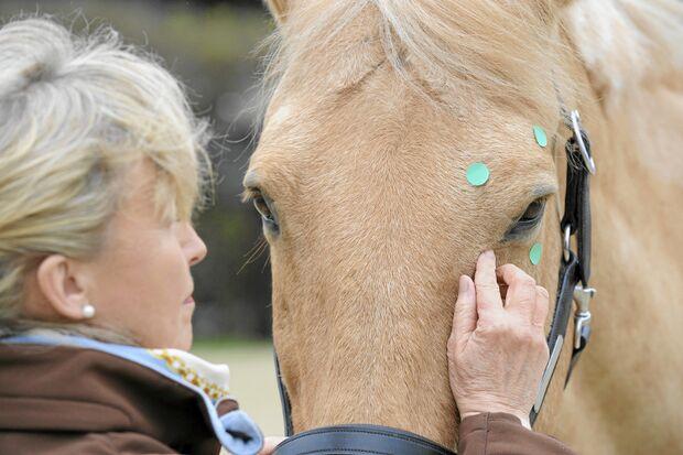 CAV Akupressur und Shiatsu für Pferde