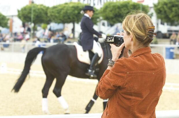 CAV Angst bei Sportpferden Bild3
