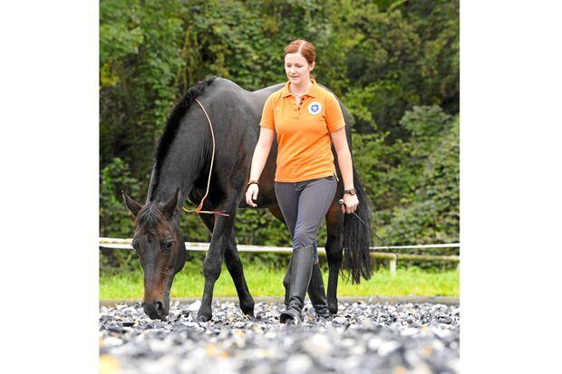 CAV-Anja-Rudolf-Pferdekenner-Cavallo-Cup-D