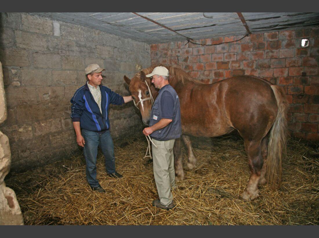 CAV Arbeitspferde in Polen
