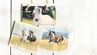 CAV Bastelecke Fotos auf Holz Aufmacher Artikel