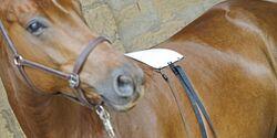 CAV Bioresonanz Pferd