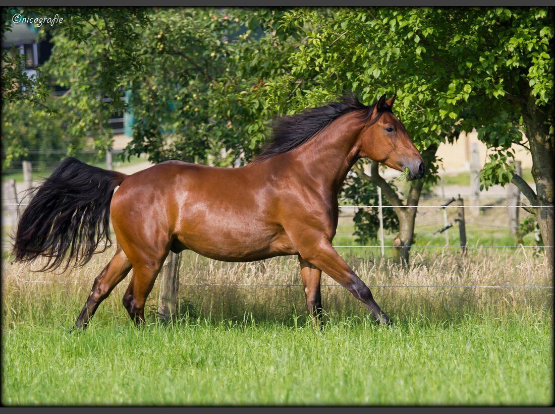 CAV CEWE Fotowettbewerb 2013 Leserfotos Nicole Poschkamp - Lesertext: Bild 1 ist bei einem Besuch der Pferdehilfe Sonnenhof e.V. in Haltern entstanden. Jamal (5 Jahre)  kam letzten Spätherbst ziemlich verwahrlost dort an.  Er ist ein Sohn eines Elitehengs