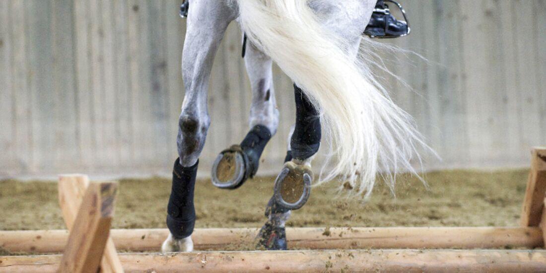 CAV Cavaletti Reiten Pferdebeine Bandagen Eisen Schimmel Schweif