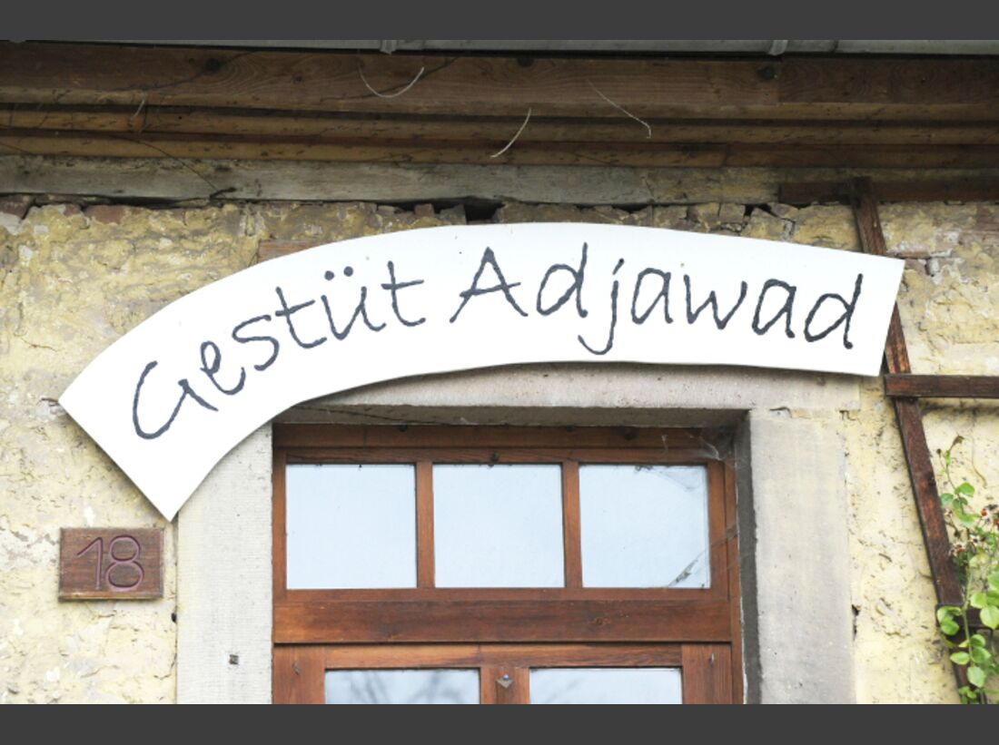 CAV Distanzreiten Anne Wegner Endurance Team Adjawad Distanz_10