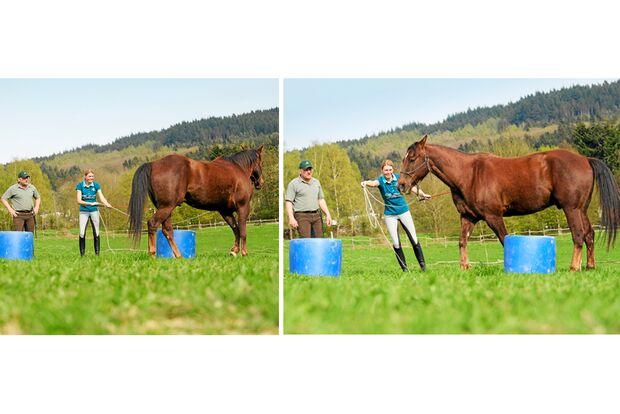 CAV Dressur Horsemanship 5