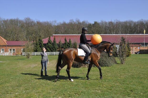 CAV Emotion Pferd Tour Uelzener 2012 Daisy Bell Ehrensache