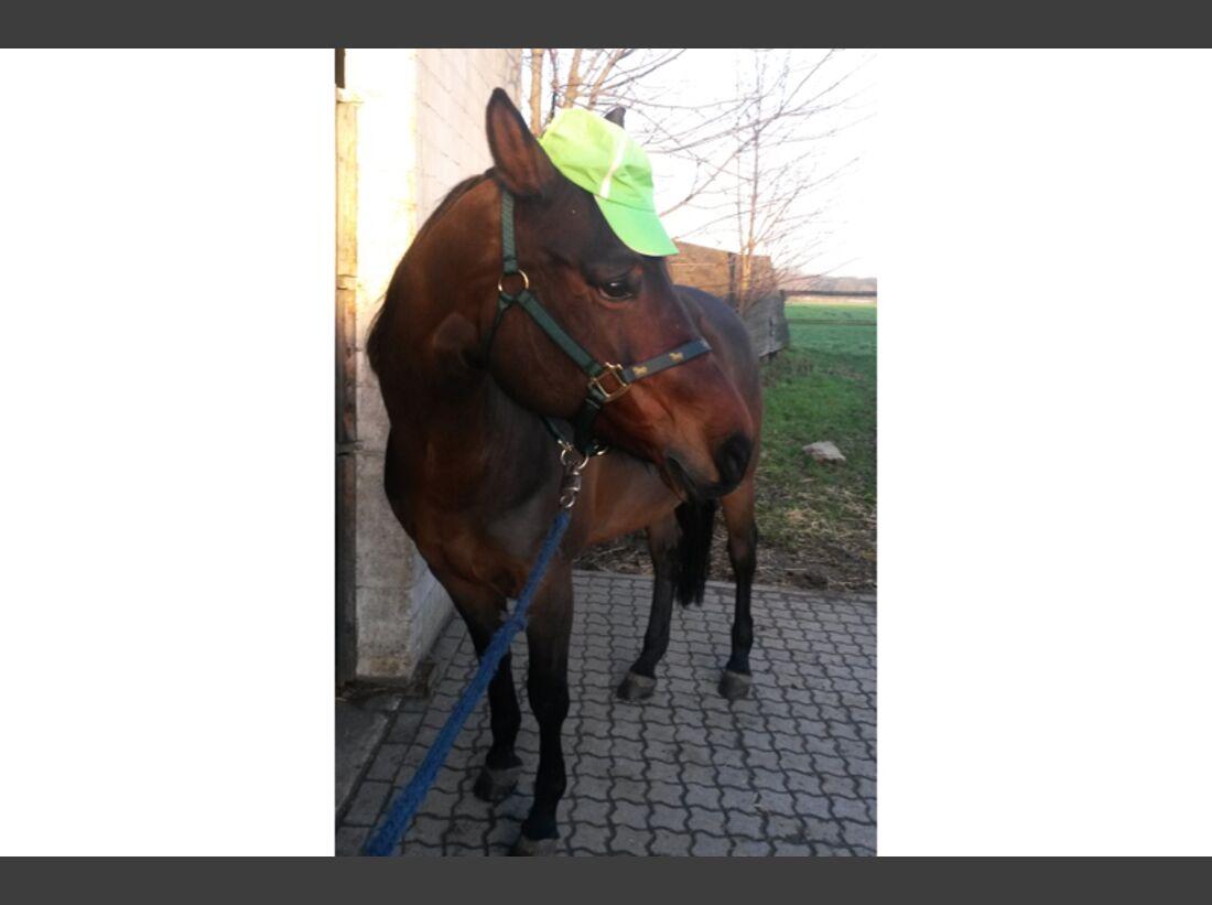 CAV Fan-Pferde Jamie Maren Jeromin