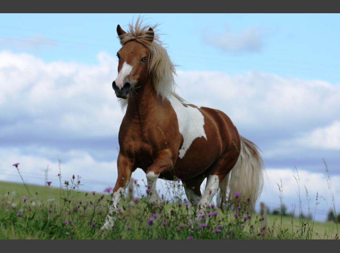 CAV-Fan-Pferde-Leseraktion-2013-Flicka (jpg)