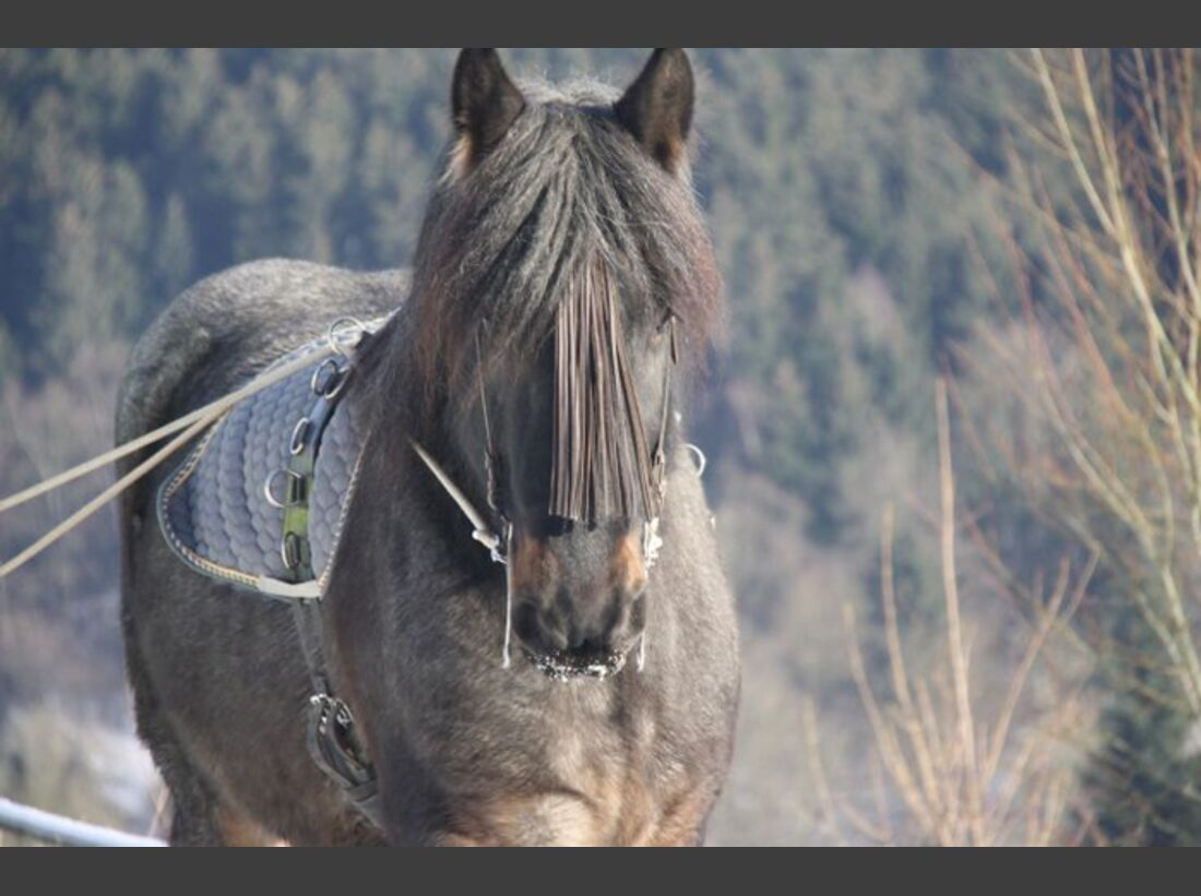 CAV-Fan-Pferde-Leseraktion-2013-Floris (jpg)