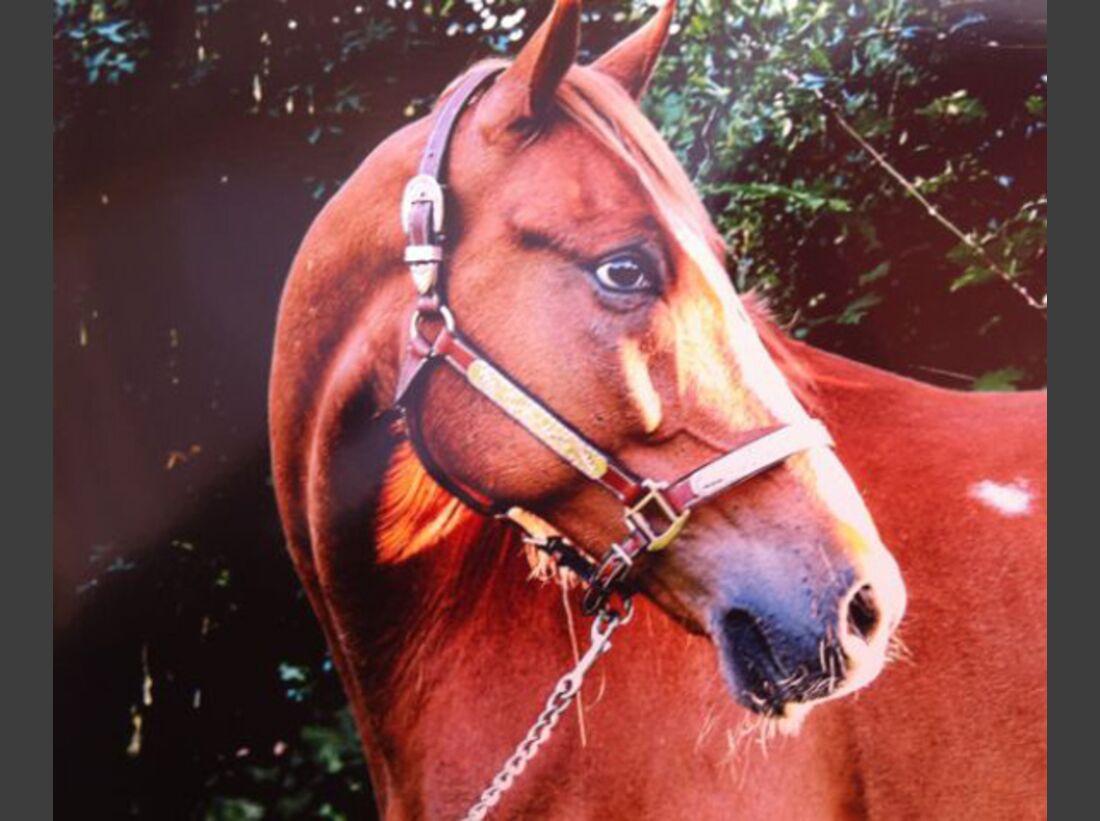 CAV-Fan-Pferde-Leseraktion-2013-GoldenFire (jpg)