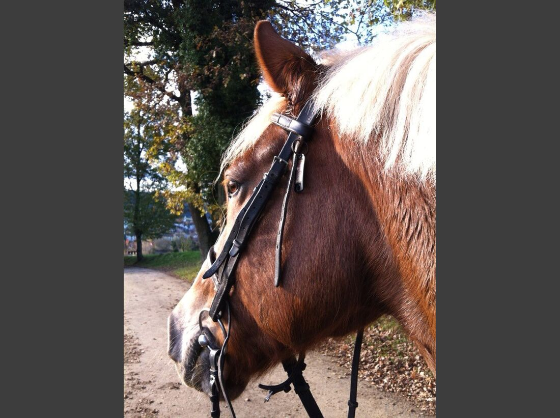 CAV-Fan-Pferde-Leseraktion-2013-Jessica (jpg)