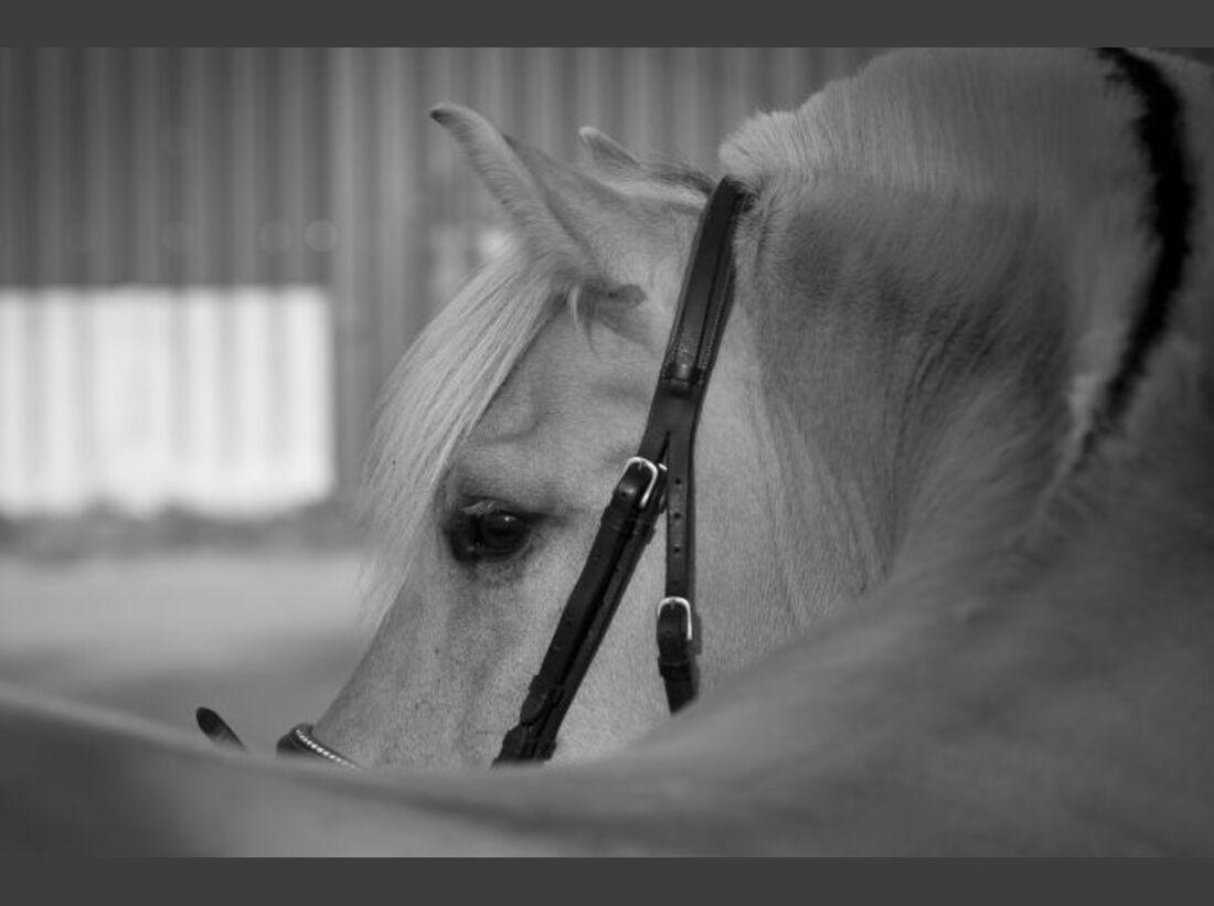 CAV-Fan-Pferde-Leseraktion-2013-Jiilke (jpg)