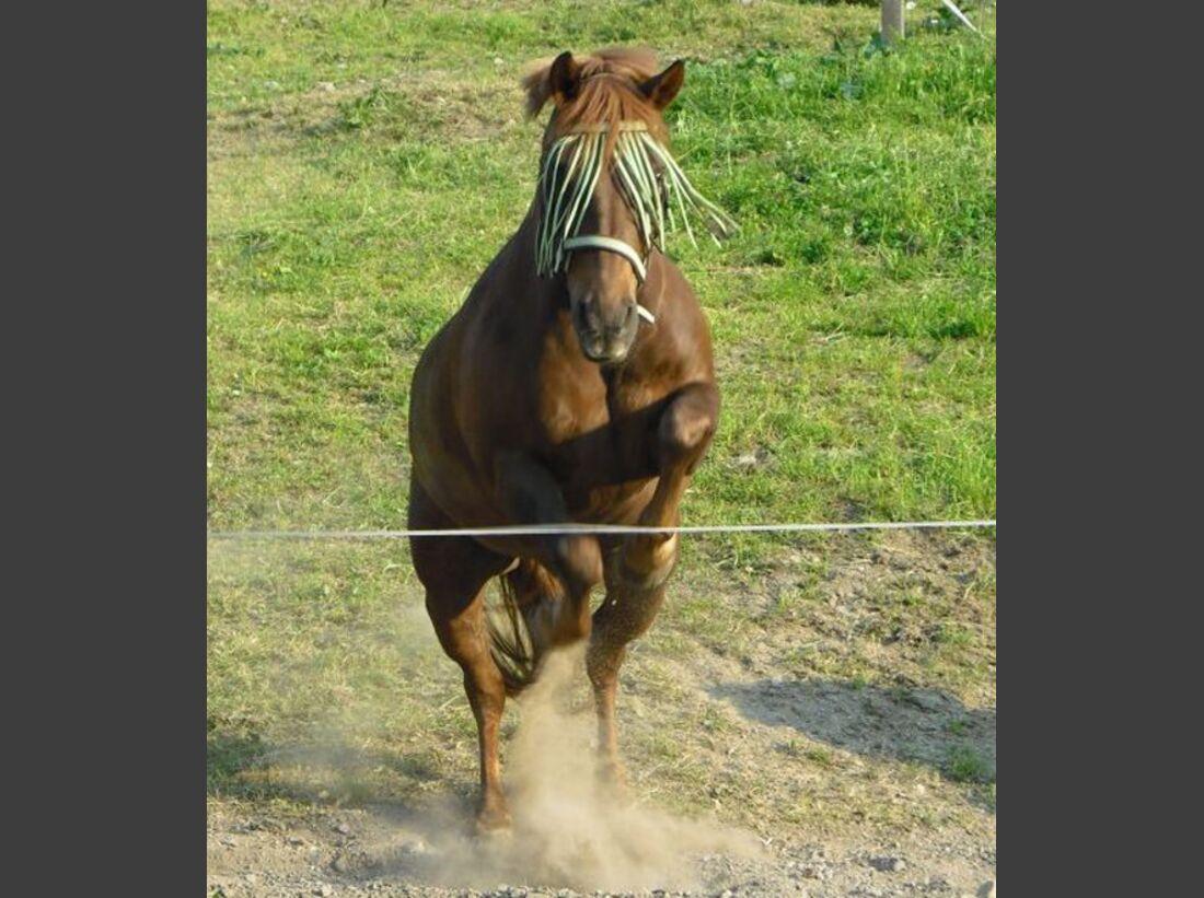 CAV-Fan-Pferde-Leseraktion-2013-JuliasPferd (jpg)
