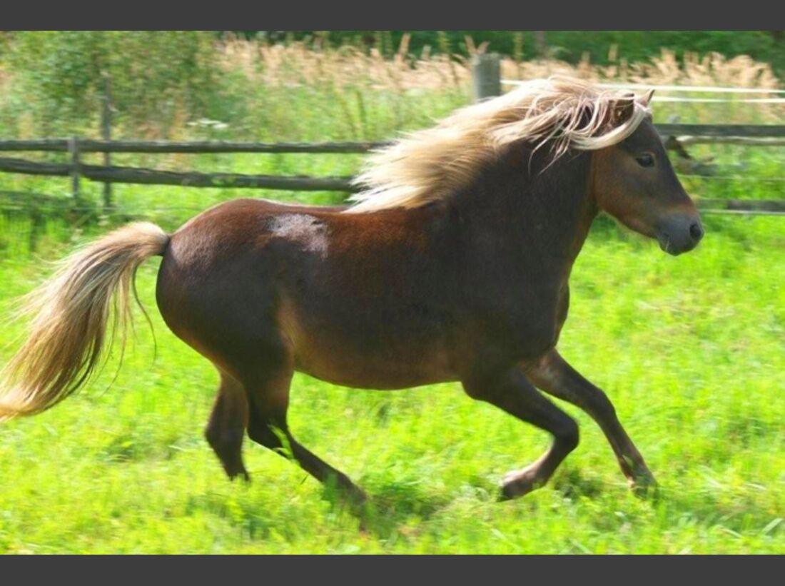 CAV-Fan-Pferde-Leseraktion-2013-Stephanie_Shetty (jpg)