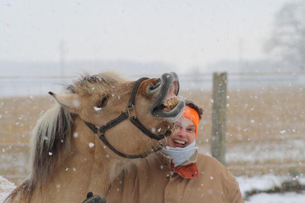 CAV-Fan-Pferde-Leseraktion-2013-Tjorven_Norweger (jpg)
