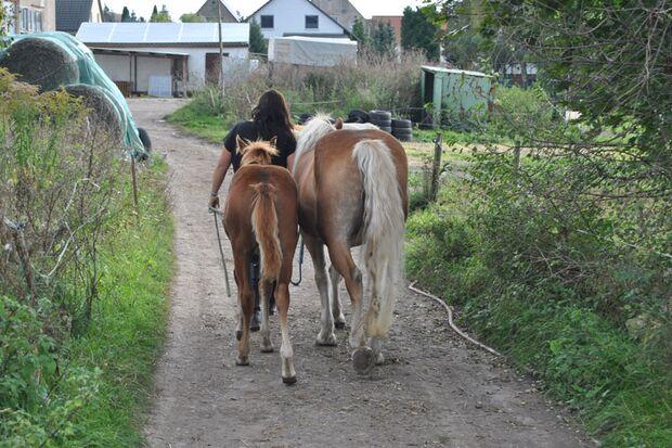 CAV-Fan-Pferde-Leserfotos-Chantal-Goliath