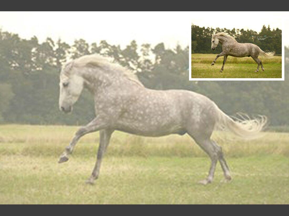 CAV Fan-Pferde Nero Franzii Egginger
