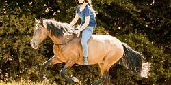 CAV Freiheit und Grenzen beim Pferd