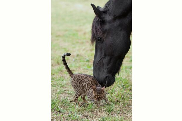 CAV-Friese-Tier-Freundschaft-Werner-Schmäing7