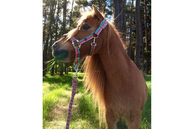 CAV Geburtstagspferde Margit Nelly