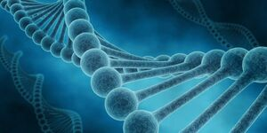 CAV Gendefekte Pferd DNA