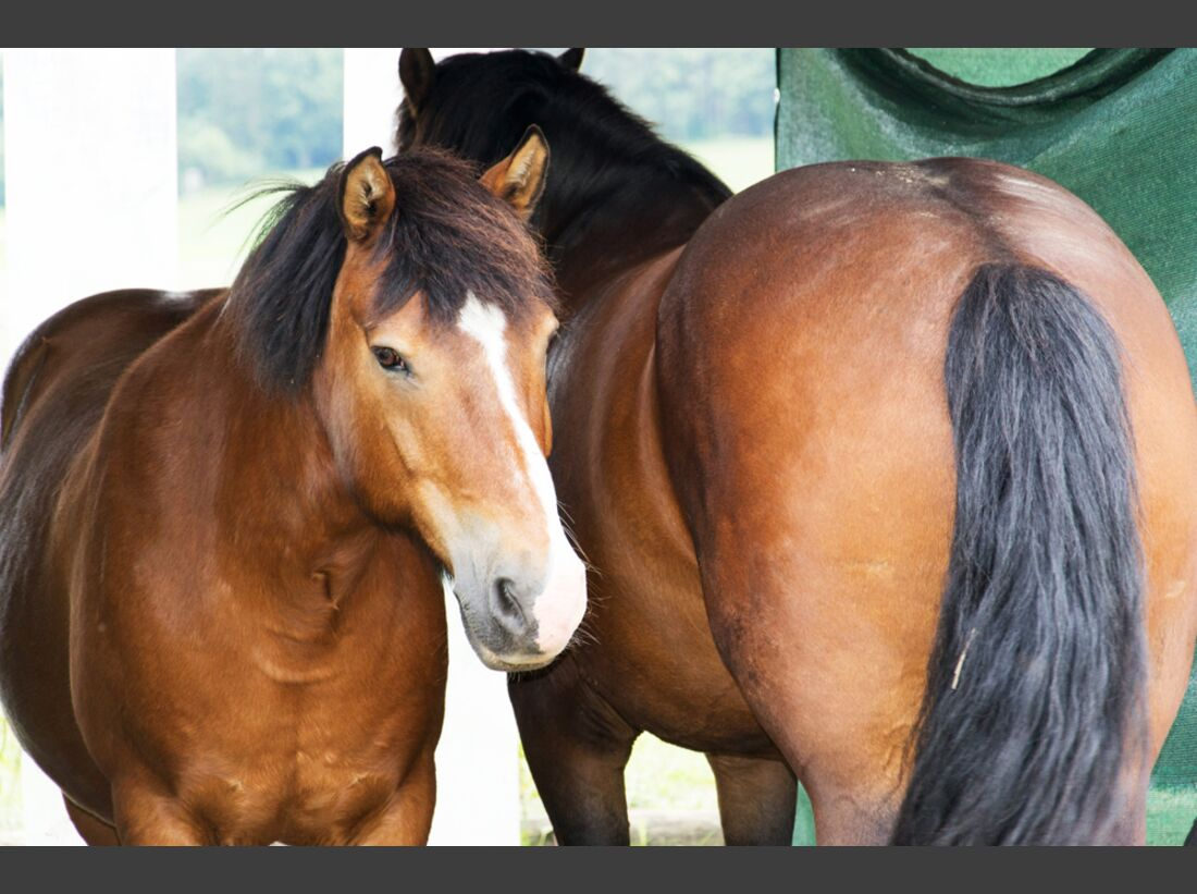 CAV Kommunikation ruhiges Pferd