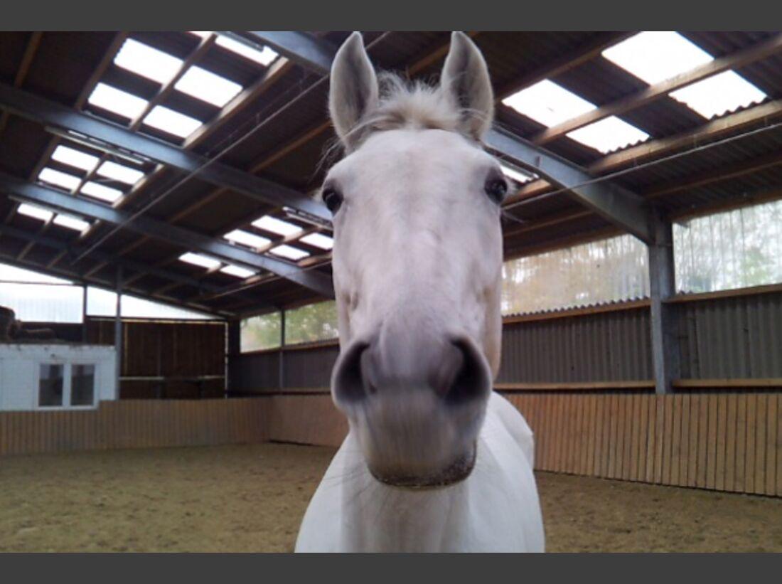 CAV Leserfotos Pferdenasen 27