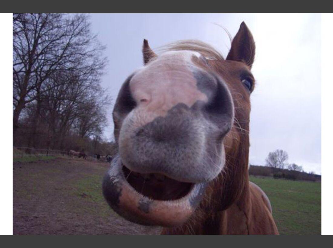 CAV Leserfotos Pferdenasen 31