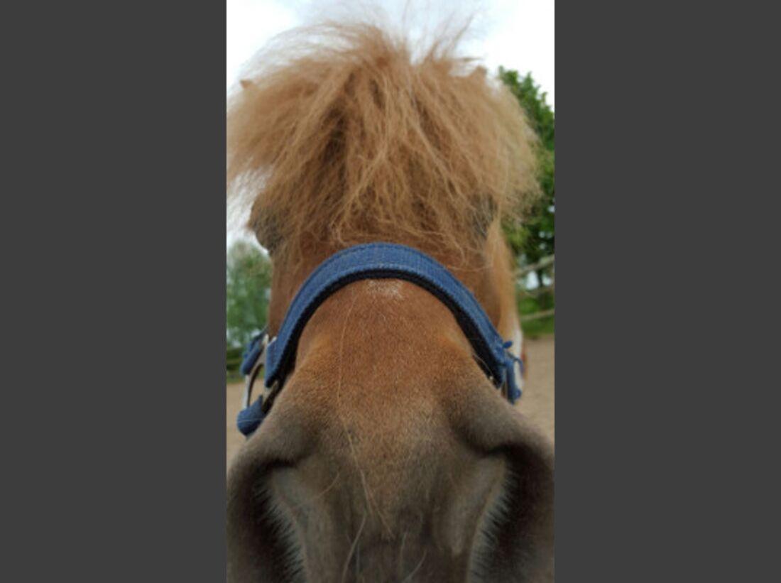 CAV Leserfotos Selfies Pferde Mäxchen