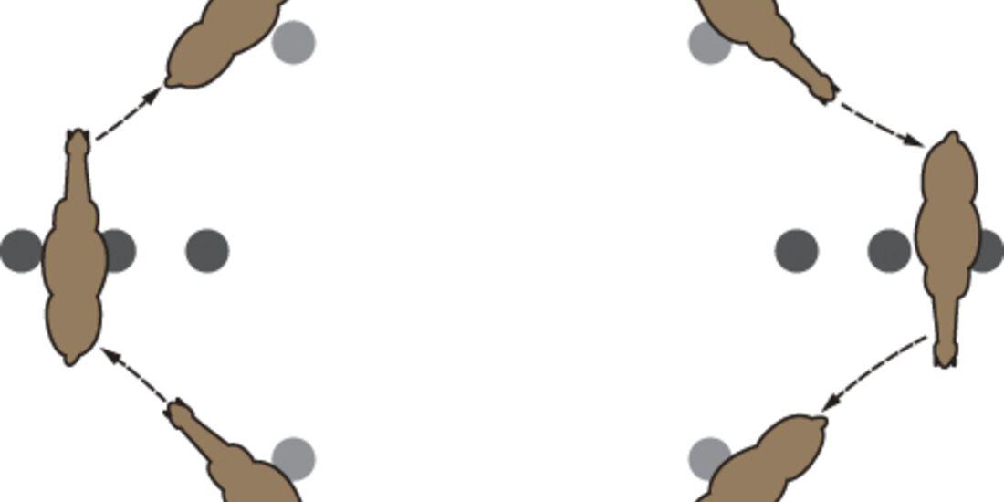 CAV Meisterkreis Übungen Kreis Hütchen 5
