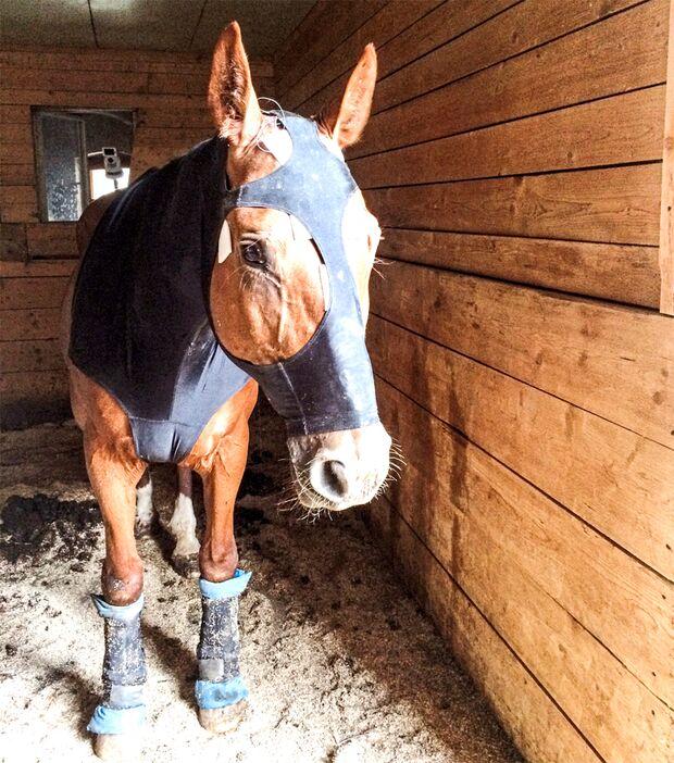 CAV Pferd Schlaf Schlafmangel Elektroden