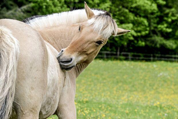 CAV Pferd Weide Knabbert Putzen