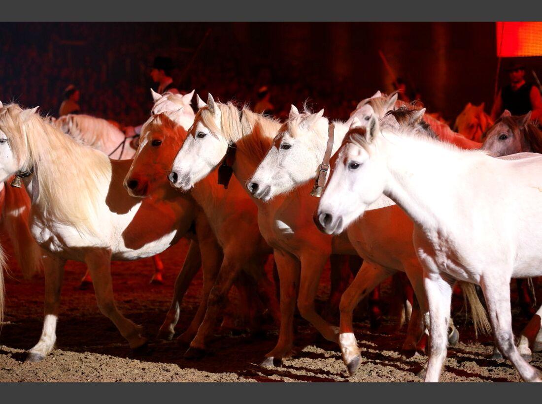 CAV Pferd und Jagd 21