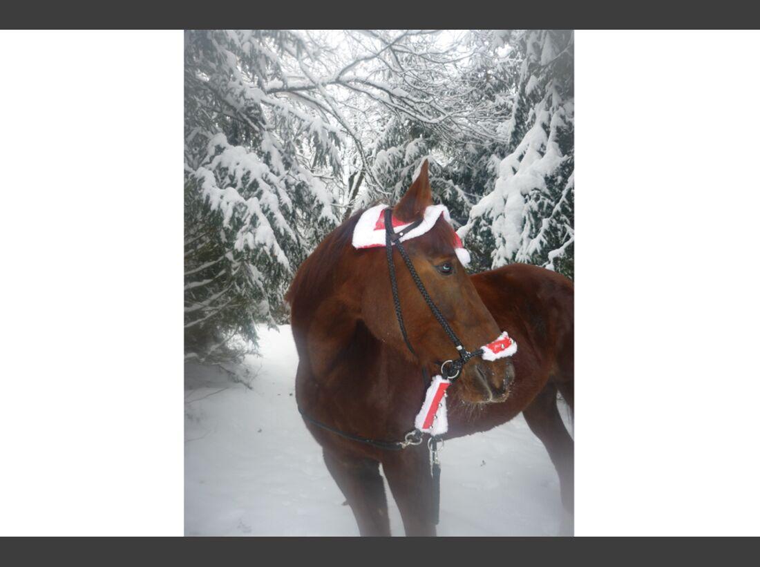 CAV Pferde Schnee Winter 2015 Birgit Foxl