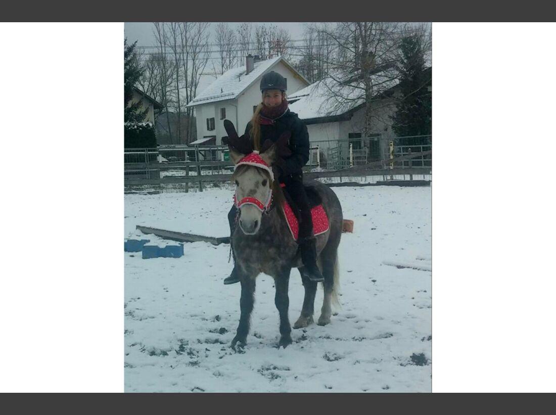 CAV Pferde Schnee Winter 2015 Daniela Greißl