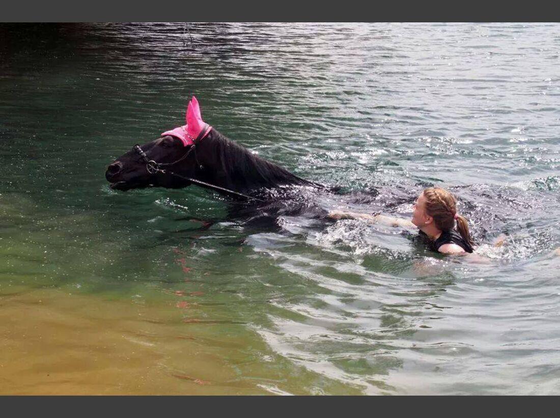 CAV-Pferde-beim-schwimmen-Kunk (jpg)