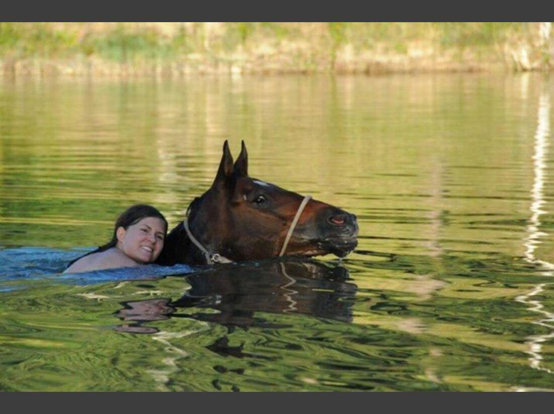 CAV-Pferde-beim-schwimmen-Leibinger (jpg)