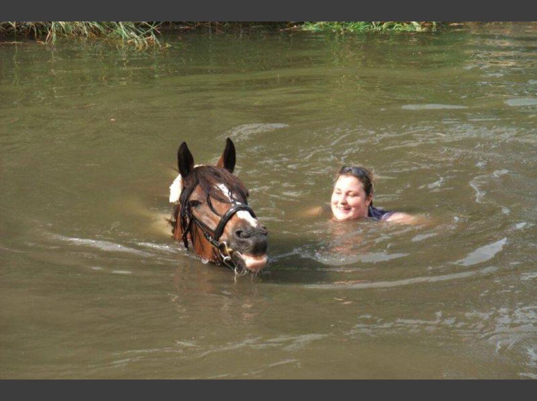 CAV-Pferde-beim-schwimmen-Lisa-Meyer-zu-Hoerste (jpg)