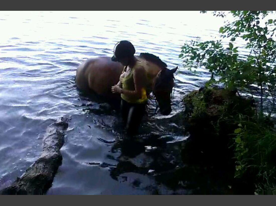 CAV-Pferde-beim-schwimmen-Oertelt (jpg)