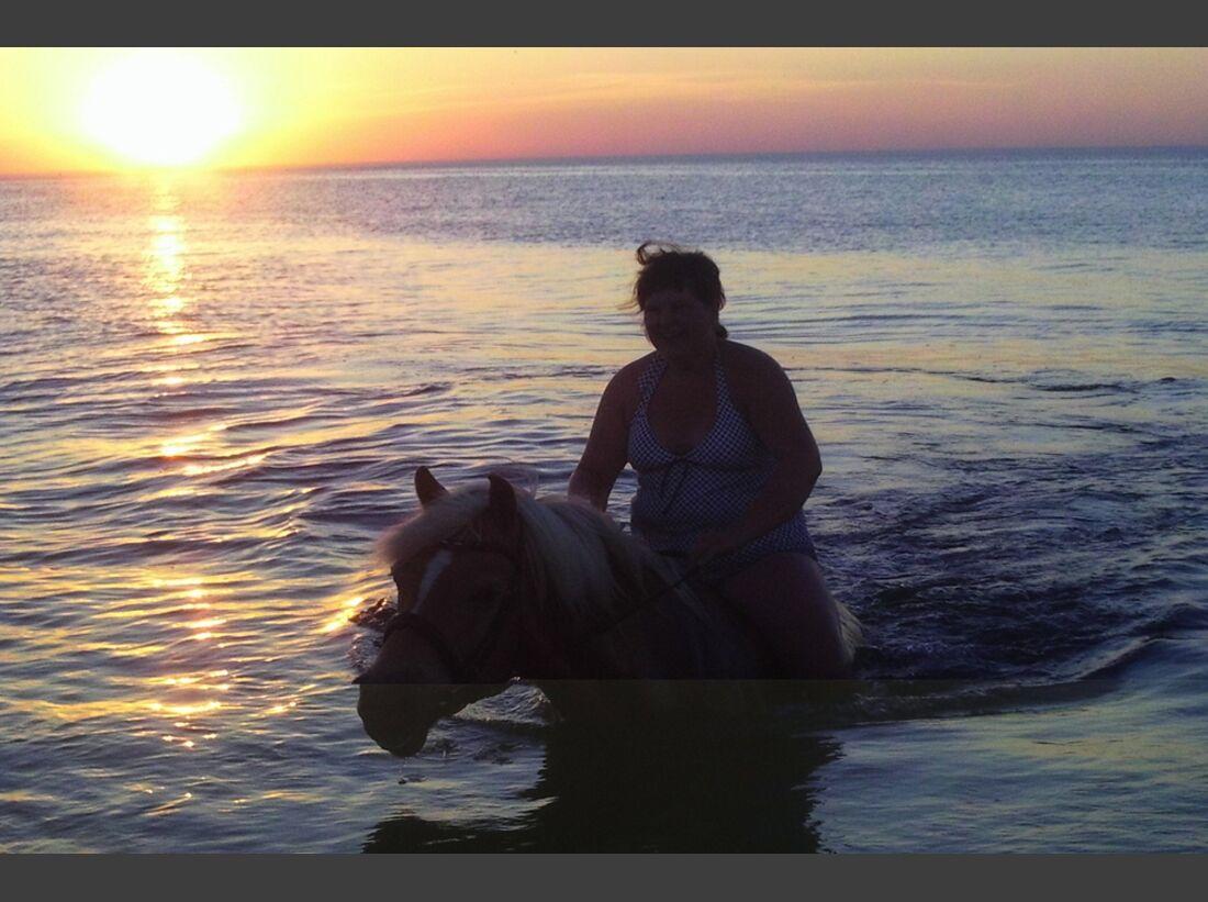 CAV-Pferde-beim-schwimmen-Voss (jpeg)